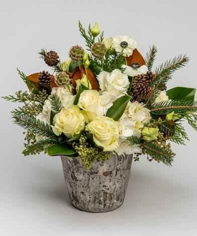 christmas roses birch pinecones