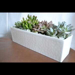 modern succulents1