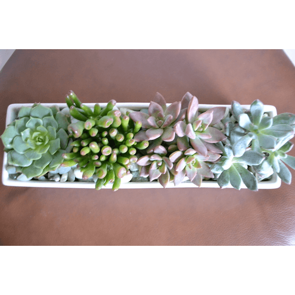 modern succulents2