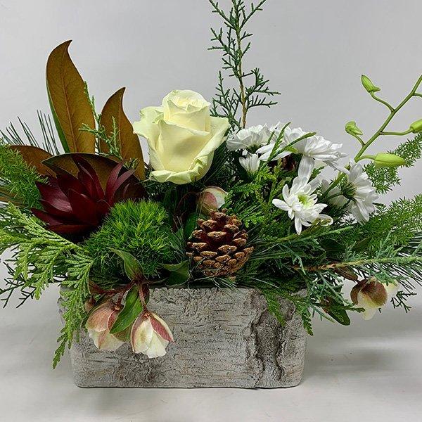 pine cones magnolia disbud white