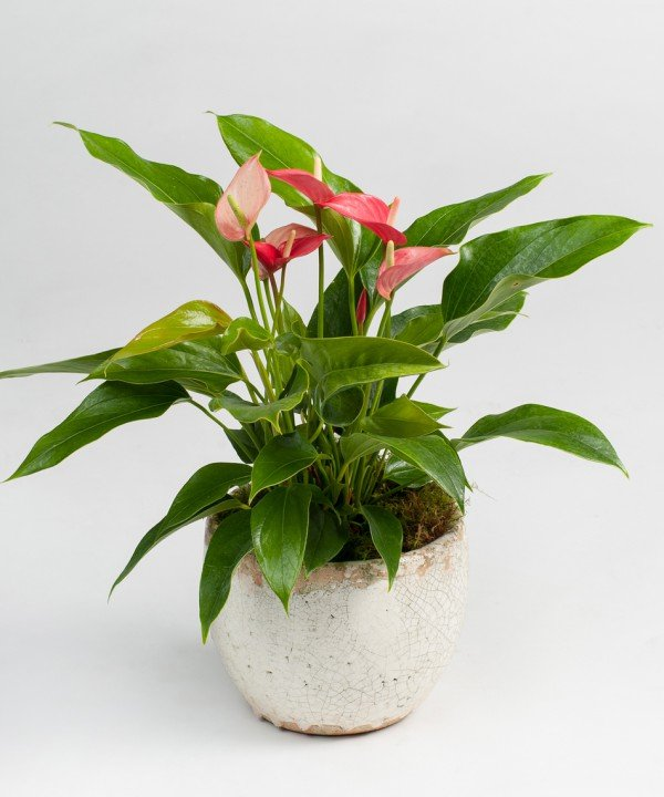 potted tropical e1461127615628