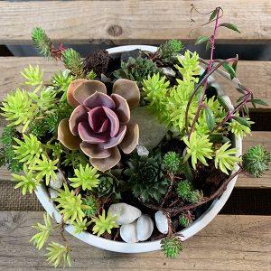 Succulent Garden 7 inch