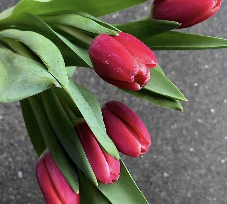 Fantastic Valentine Day's Gift Ideas in Squamish BC
