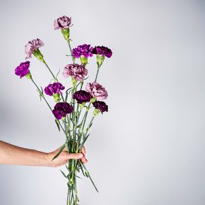 Bunch of Carnations Purple and Pink
