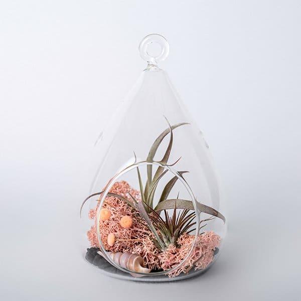 glass terrarium airplant shell dried moss pink