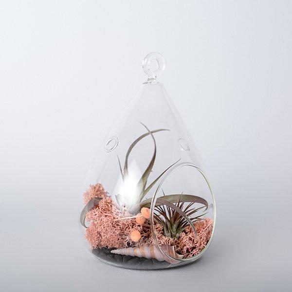 glass terrarium airplants dried moss