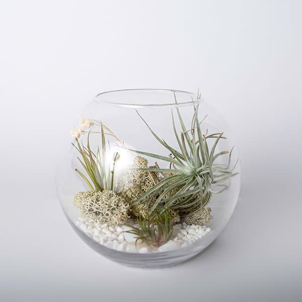 glass terrarium bowl airplants dried moss