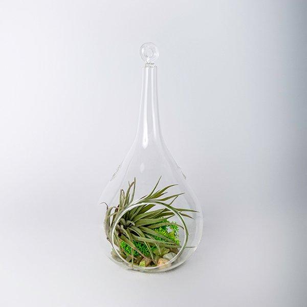 glass terrarium tall airplant dried moss green