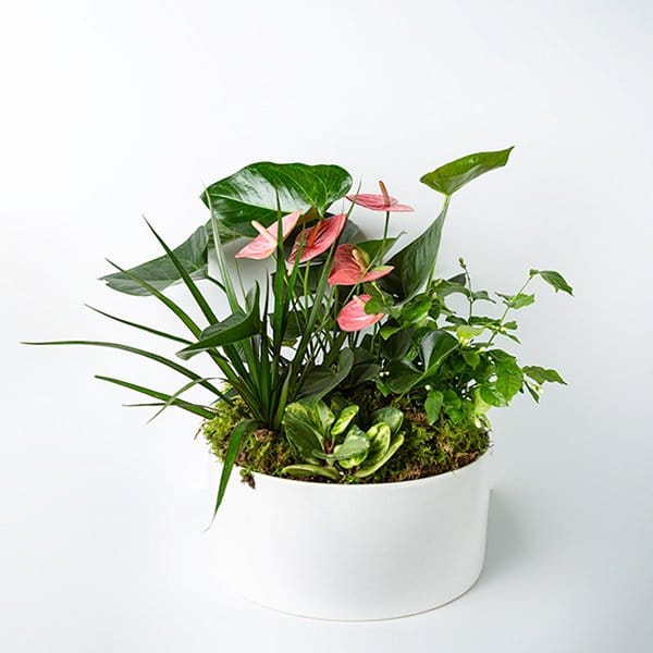 planter tropical green white