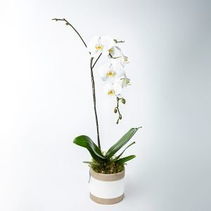 potted orchid plant pot