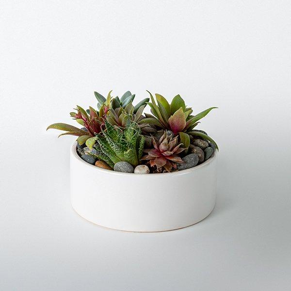 succulent garden mini green planter