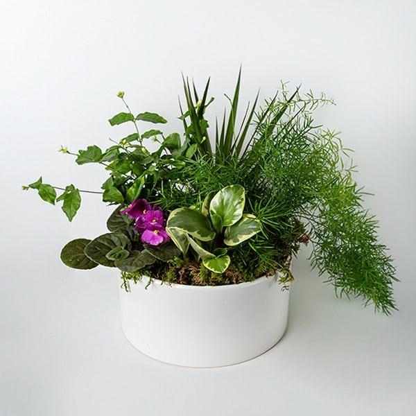 tropical planter lush green